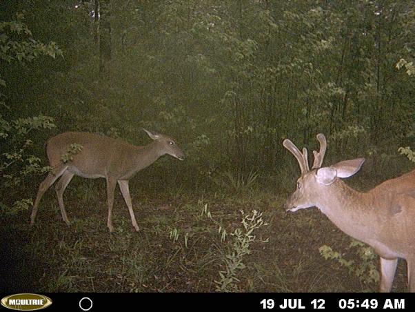 more bama deer-mdgc0137-jpg