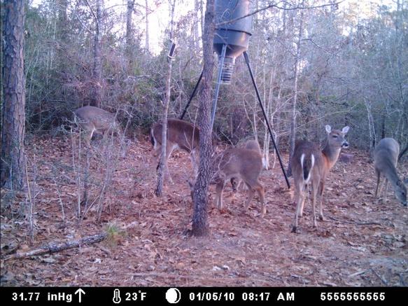 Deer Test-mdgc0183-jpg