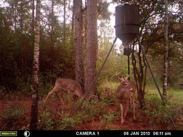 Deer Test-mfdc0483-jpg