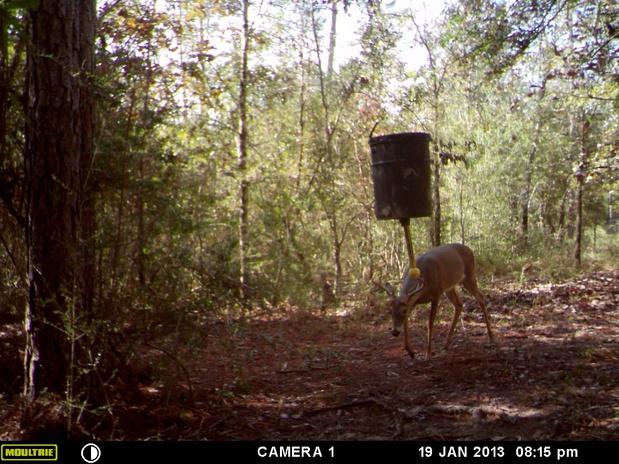 Deer Test-mfdc0630-jpg