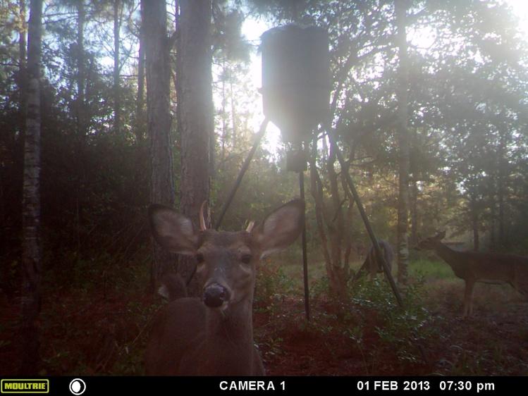 Deer Test-mfdc3402-jpg