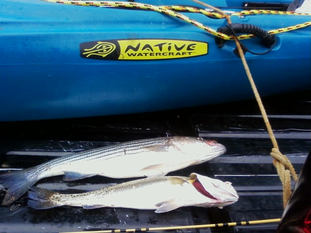 Quick Trip-new-fish-pictures-jpg