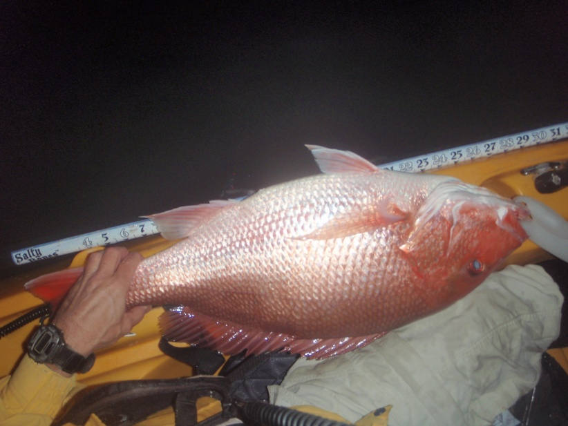 Nice Snapper Night + Groupers & Red-p2090002-jpg