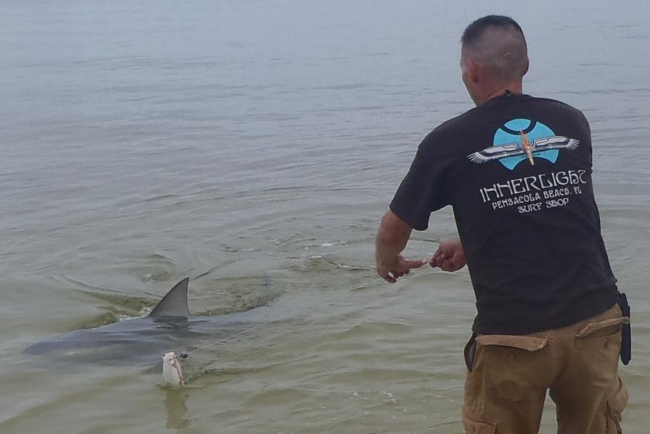 Two medium sharks and flounders-p7110277-jpg