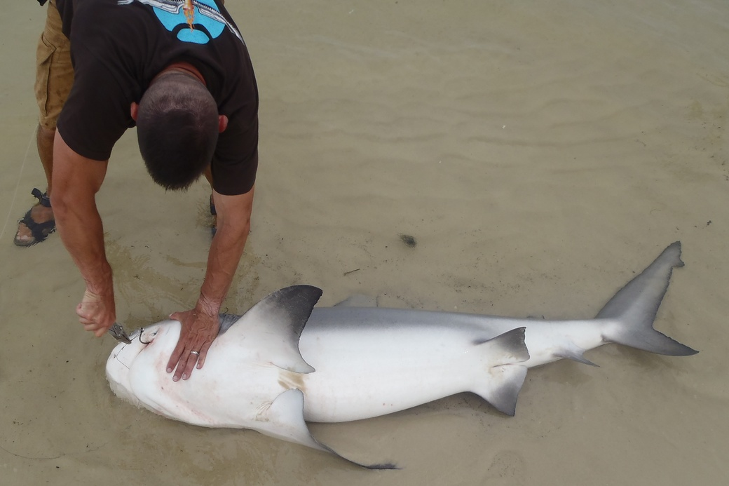 Two medium sharks and flounders-p7110285-jpg