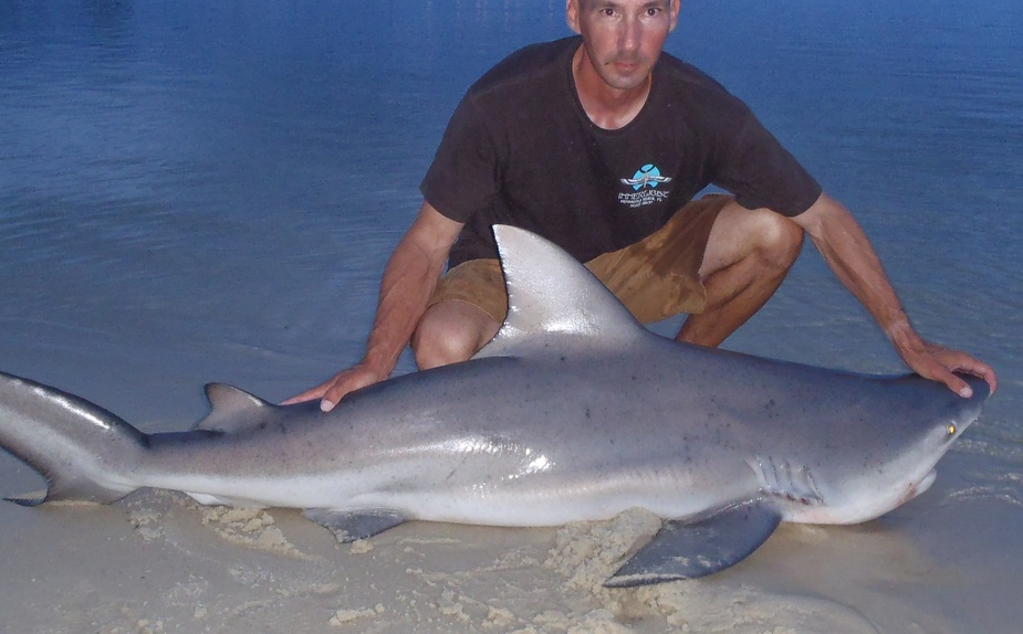 Two medium sharks and flounders-p71102972-jpg