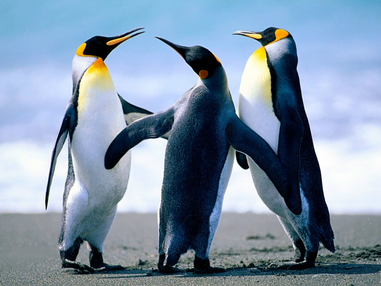 How To Post Pictures-penguins-jpg