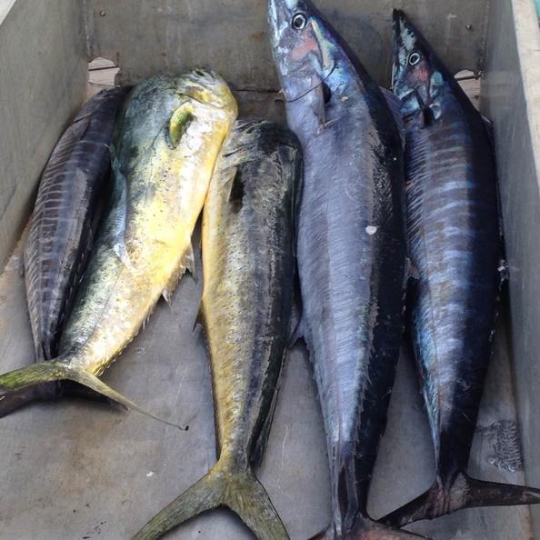 Marlin Hunter Fishing Charters-pensacola-charter-15-jpg