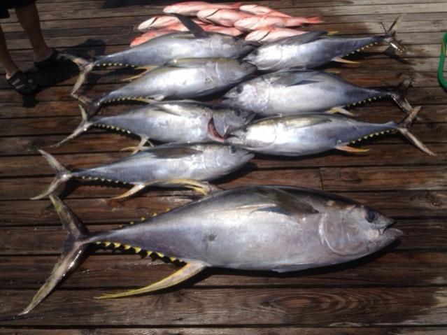 7-2 through 7-3 Tuna-photo-42-1-jpg