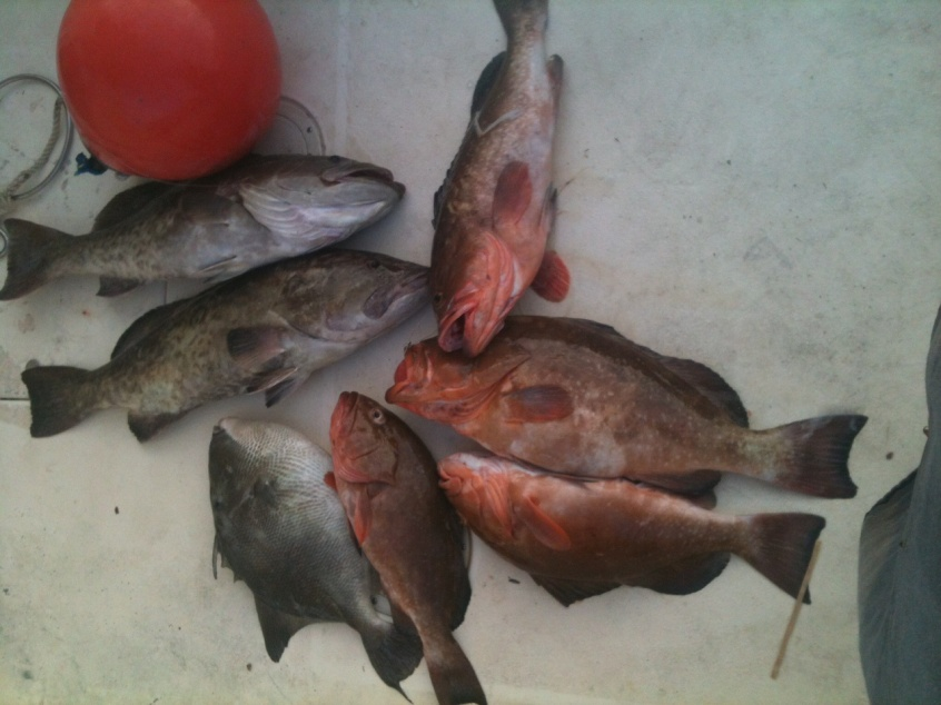 9-21-12 grouper scratching / Elbow Trolling-photo-6-jpg