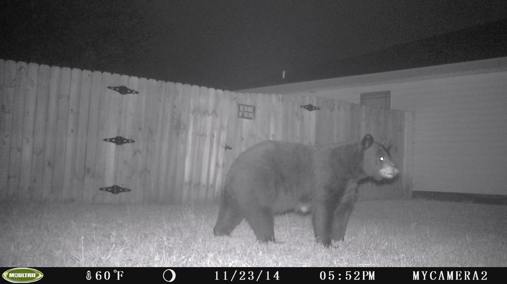 When is bear season?-pict0009-jpg