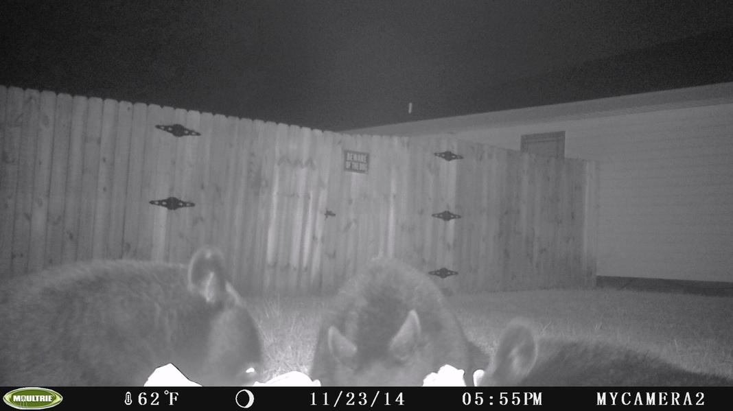 When is bear season?-pict0015-jpg