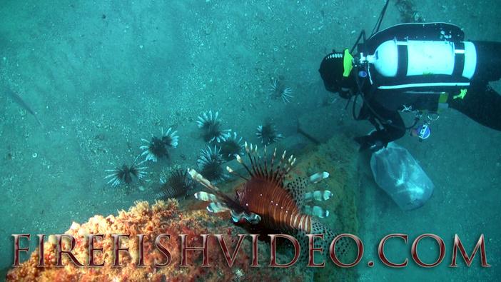 Lionfish Trip 2-18-2014-pyramid-diverff1-jpg