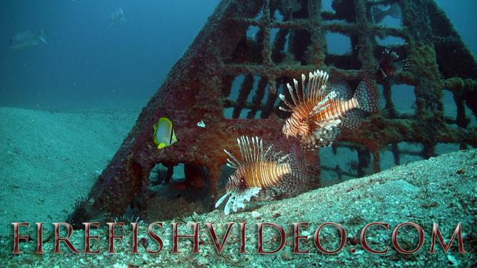 Lionfish Trip 2-18-2014-pyramid-lions1ff-jpg