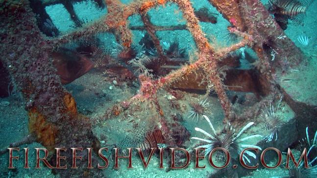 Lionfish Trip 2-18-2014-pyramid-lions2ff-jpg