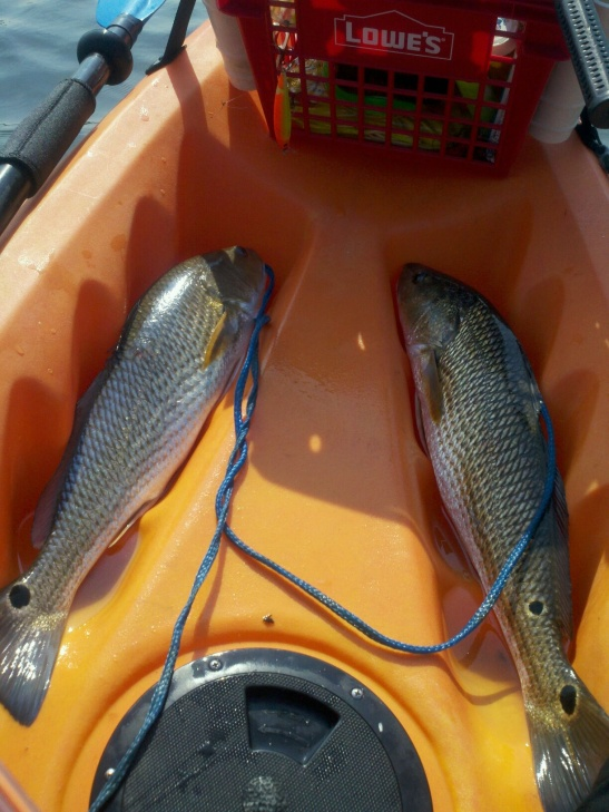 LaGrange Bayou - Freeport report-red-fish-9-18-2011-lagrange-bayou-jpg