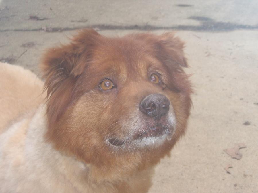 Rest in Peace my Friend-red-wonder-dog-jpg