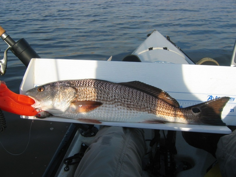Simpson River 20 December-redfish-20-dec-13-jpg