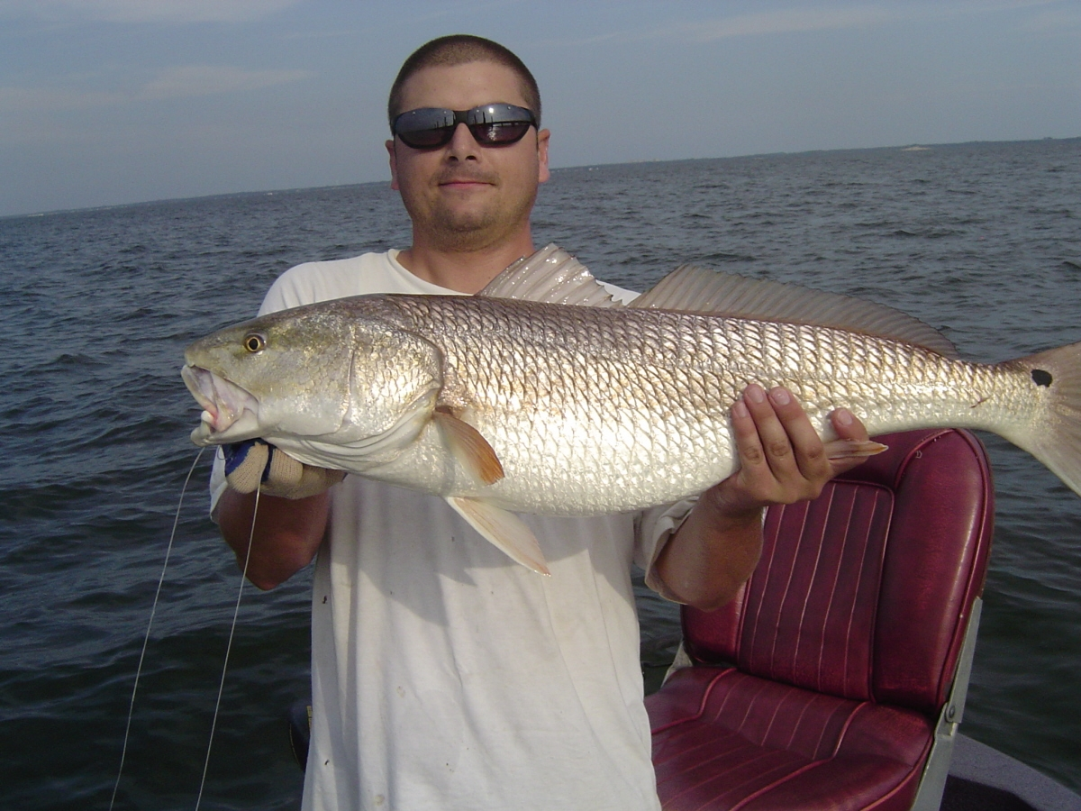 Reds are scared of purple flake?-redfish-3-jpg