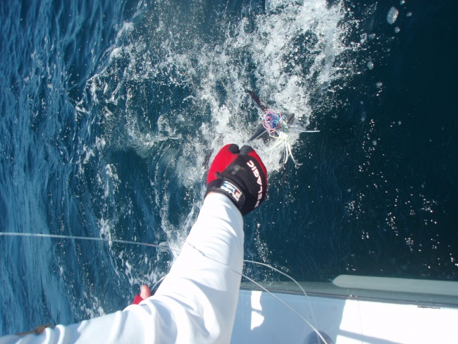 Pelagic pirate : Offshore trolling the wings-reg4-jpg