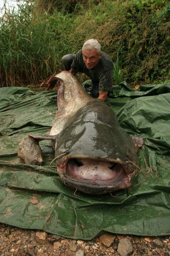 Giant Catfish in My Pond??-river-monsters-jpg