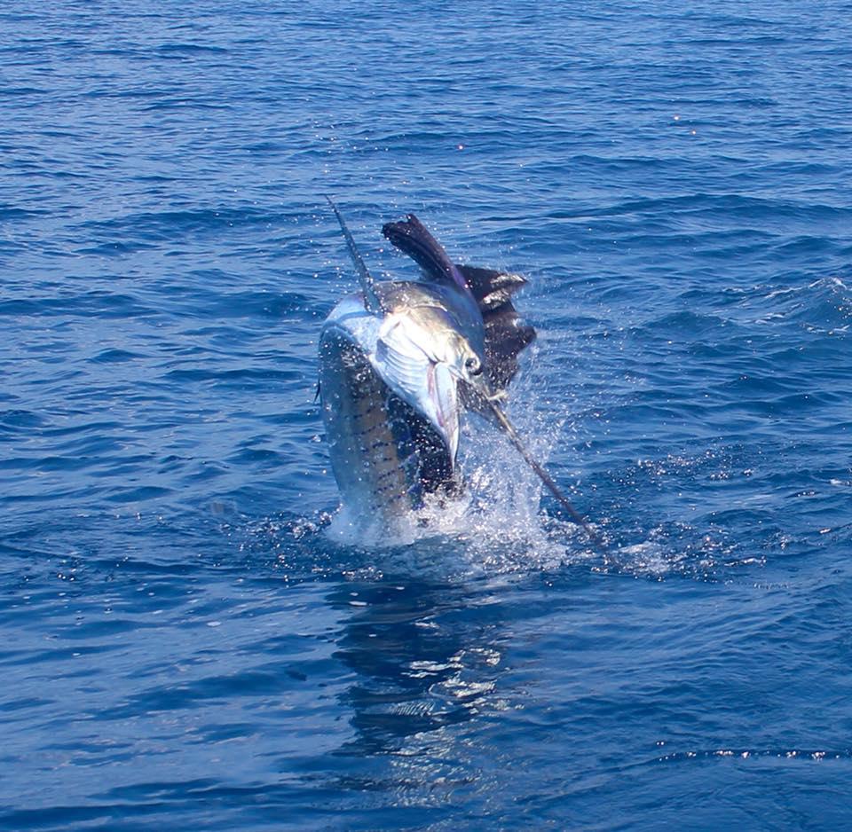 Fishing Costa Rica-sail2-jpg