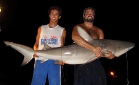 Do you eat shark-scrape-jpg