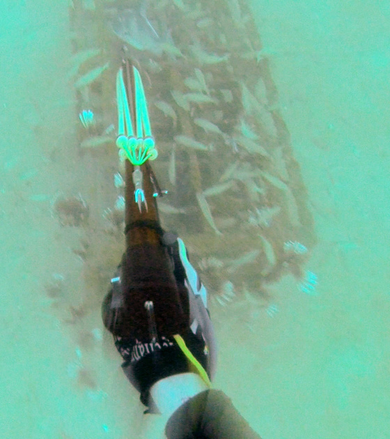 Spearfishing 2-8-14 Pics and Report-screen-shot-2014-02-09-12-42-36-pm-png-jpg