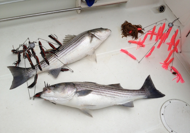 Fishing Umbrella Rigs Striped Bass - Image Of Fishing Magimages Co