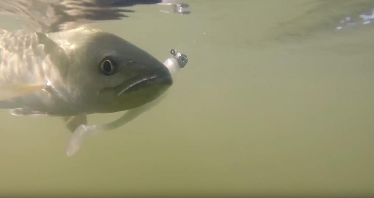 """New DockSide TV """"Deep Water Jigging Tips""""-screen-shot-2017-11-29-8-29-47-am-jpg"""