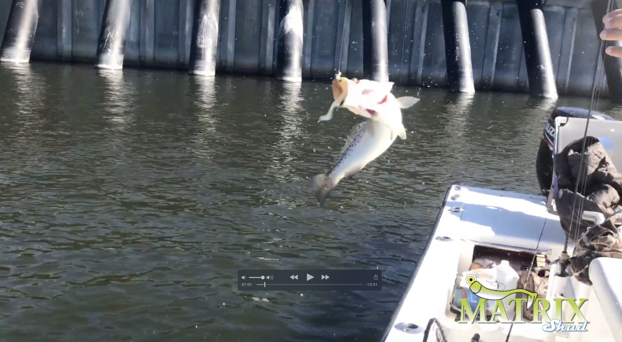"""New DockSide TV """"Meat Haul at the Wall""""-screen-shot-2017-12-28-2-05-21-pm-jpg"""