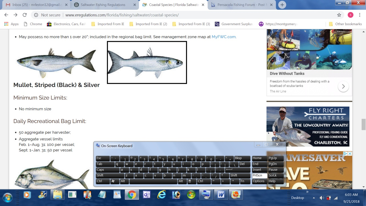 Shark identify is this a spinner?-silver-fish-jpg