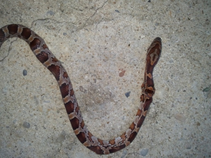 Snake ID Please!-snake-garage-jpg