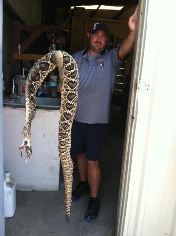 largest rattlesnake killed in Baldwin County-snake-jpg