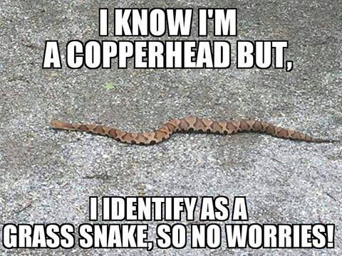 Frequency of venomous snake encounter?-ss-jpg