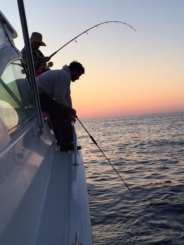 GET SHORTY Rig Report March 27/28-sunpicfish-jpg