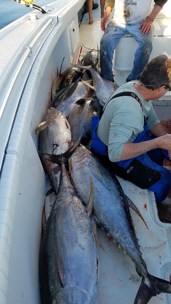 Yellowfin tuna!-t5-jpg
