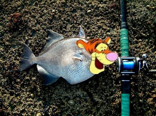 Winter Tigger Fish Spots?-tiggerfish-jpg