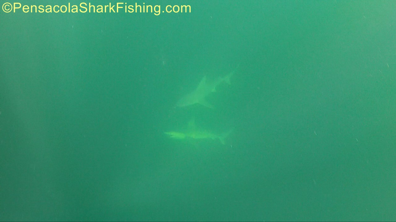 Fat Jax has been catching a few...-tsr-watermark-0188-jpg