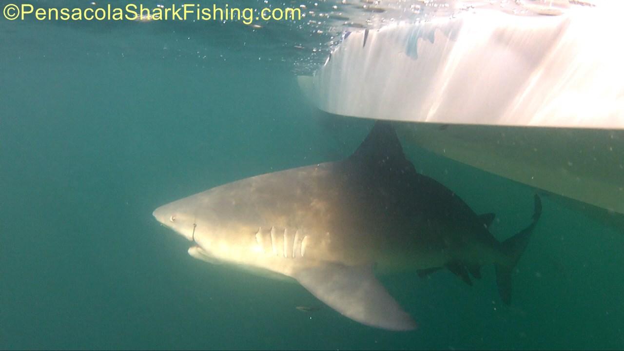 Fat Jax has been catching a few...-tsr-watermark-0204-jpg