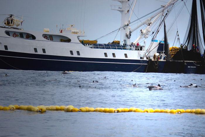 David vs. Goliath: Battle for Costa Rica's tuna-tuna-dolphins-net-jpg