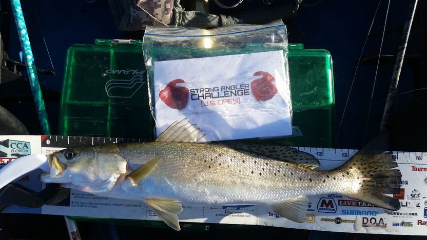 20160101-20160104 Trout, Trout, and more Trout!-uploadfromtaptalk1452184864827-jpg