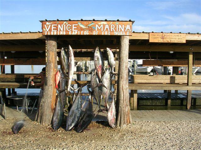 Venice Tuna Trip-venice_january_15_2007_strike_zone_031%5B1%5D-jpg