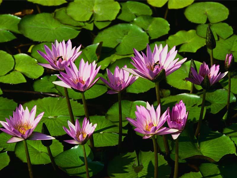 test new thread chrome / attachment-water-lilies-jpg
