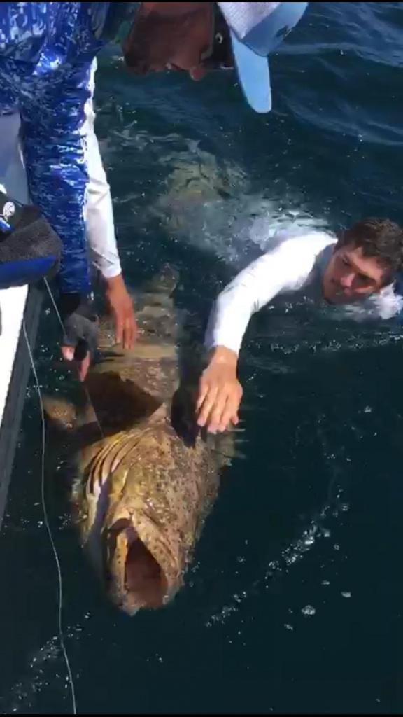 Crossing off bucket list fish!!!-whatsapp-image-2019-06-16-9-05-32-pm-jpg