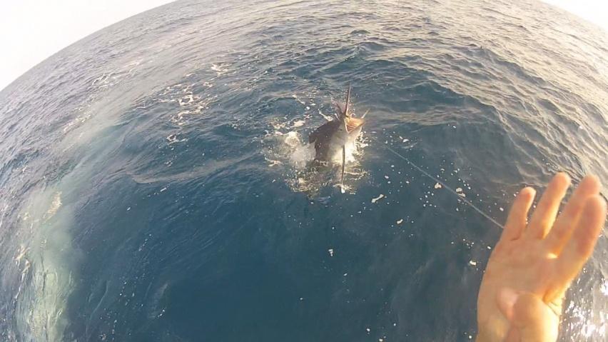 Aquaviva white, sail, sword 7/29-white-marlin-1-jpg