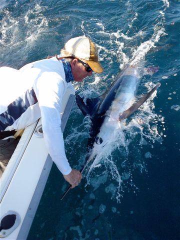 First Marlin-whitemarlin1062012-jpg