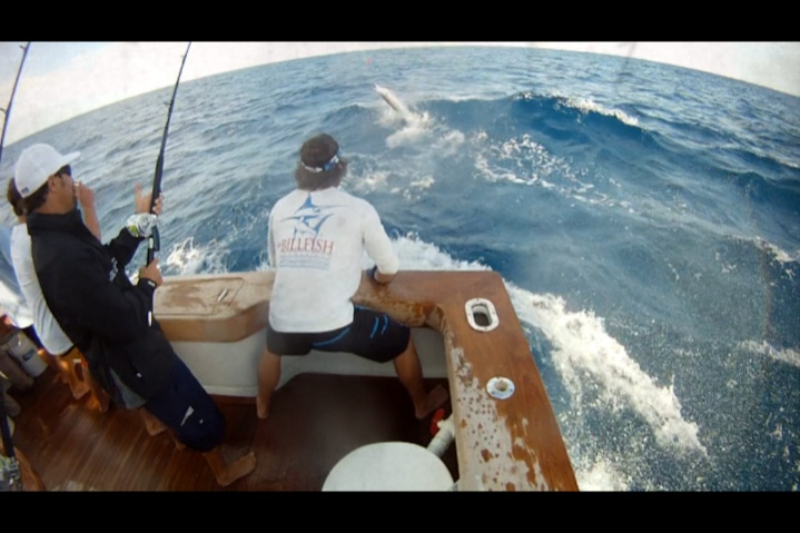 A few sailfish pics from the weekend-woody-wire-1-jpg