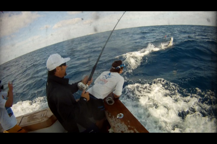 A few sailfish pics from the weekend-woody-wire-3-jpg
