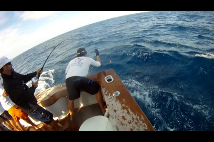 A few sailfish pics from the weekend-woody-wire-5-jpg